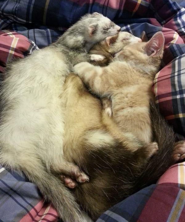 Big Snuggle