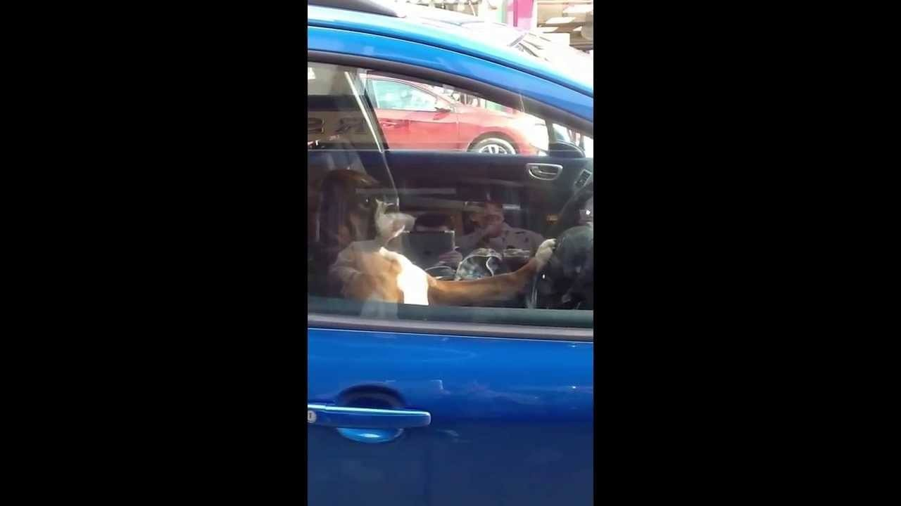 Dog Is Tired Of Waiting For Owner