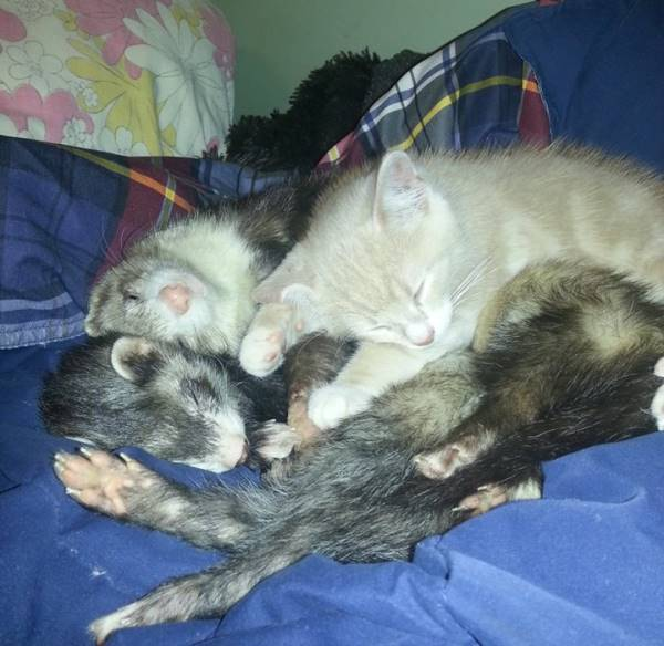 Ferret Cat Family Portrait