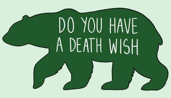 How To Pet Animals Bears