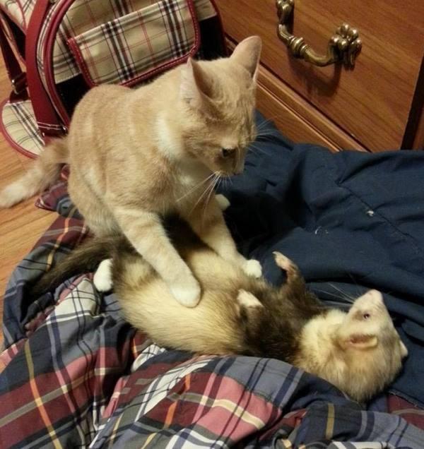 Interspecies Animal Love