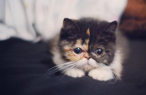 Baby Pudge