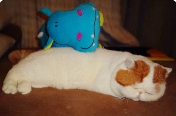 Snoopybabe Sleeping With A Stuffed Animal