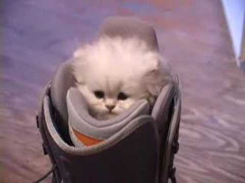Video thumbnail for youtube video 30 Of The Cutest Kitten Videos That Will Make You Explode In Delight – PBH2