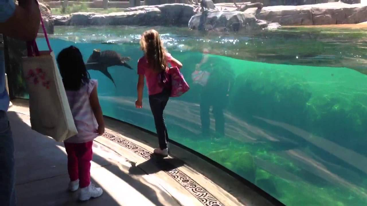 A Seal And A Little Girl Play Tag