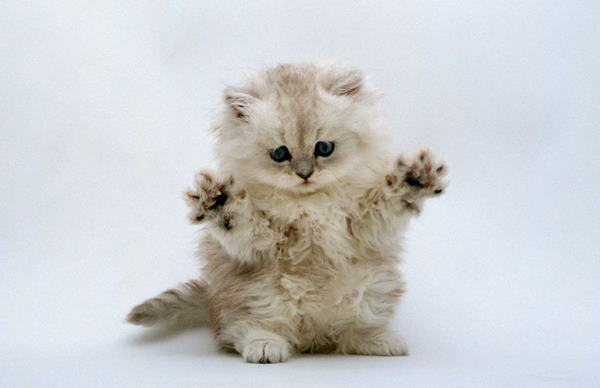 Cute Kitten Videos