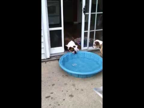 Gus Versus The Pool
