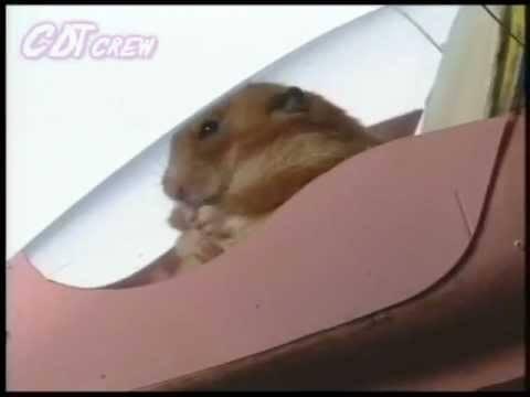 Hamster Dreams