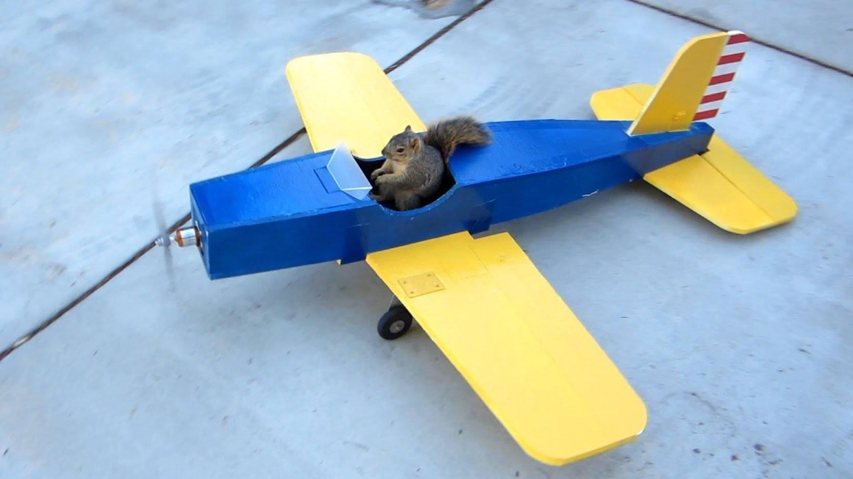 Squirrel Steals Model Airplane