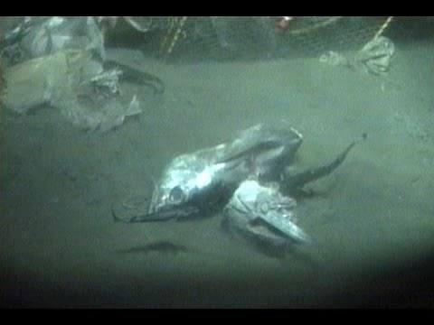 The Bizarre Creatures Of Japan's Suruga Bay