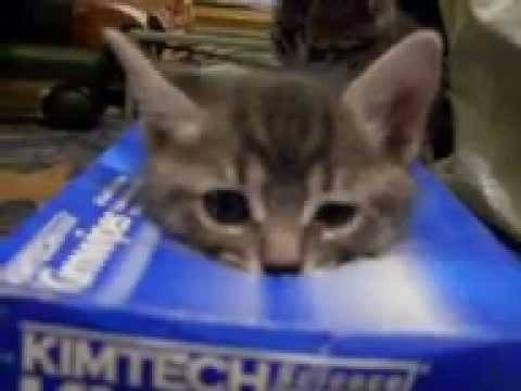 Video thumbnail for youtube video The Cutest Kitten Videos That Will Make You Explode In Delight