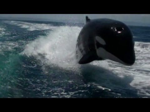 An Uncomfortably Close Encounter With A Killer Whale