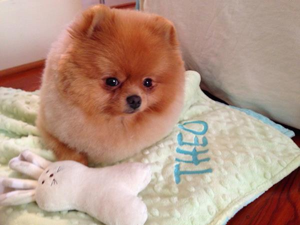 Loaf Of Pomeranian