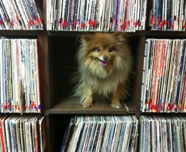 Pomeranian In The Stacks