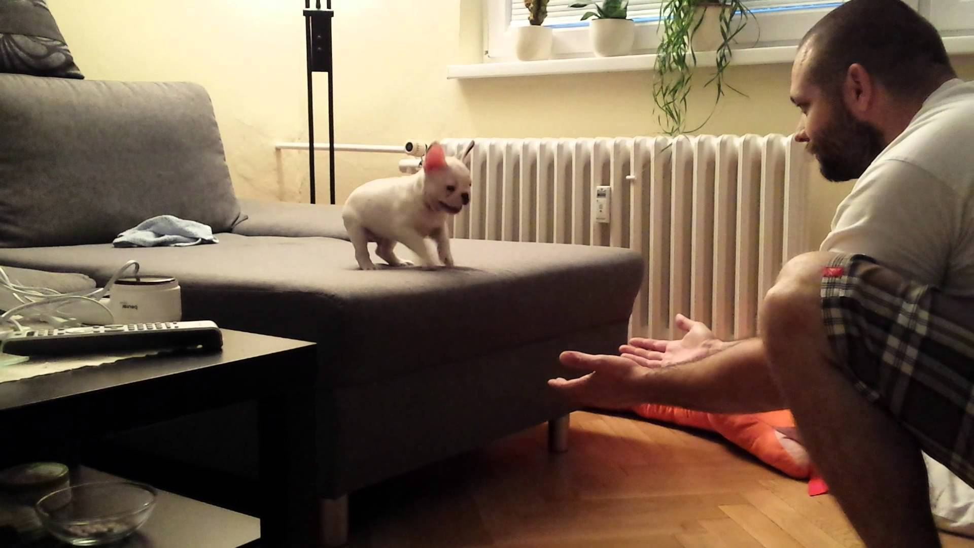 Video thumbnail for youtube video Bulldog GIFs That Prove They're The Greatest Canines