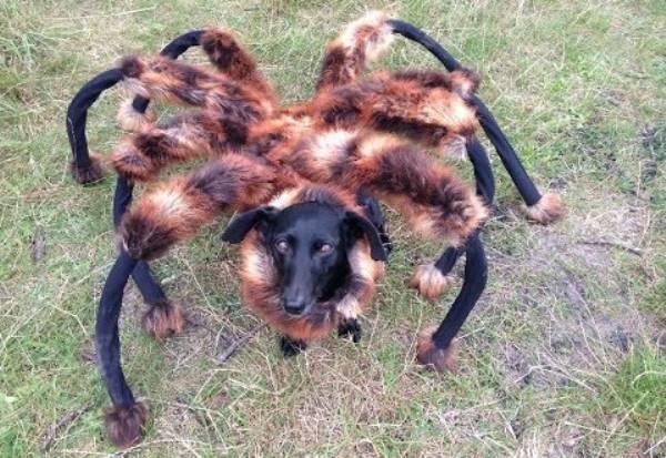 Chica Dog Spider Prank
