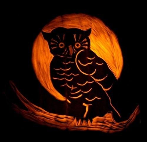 pumpkin-carvings-owl