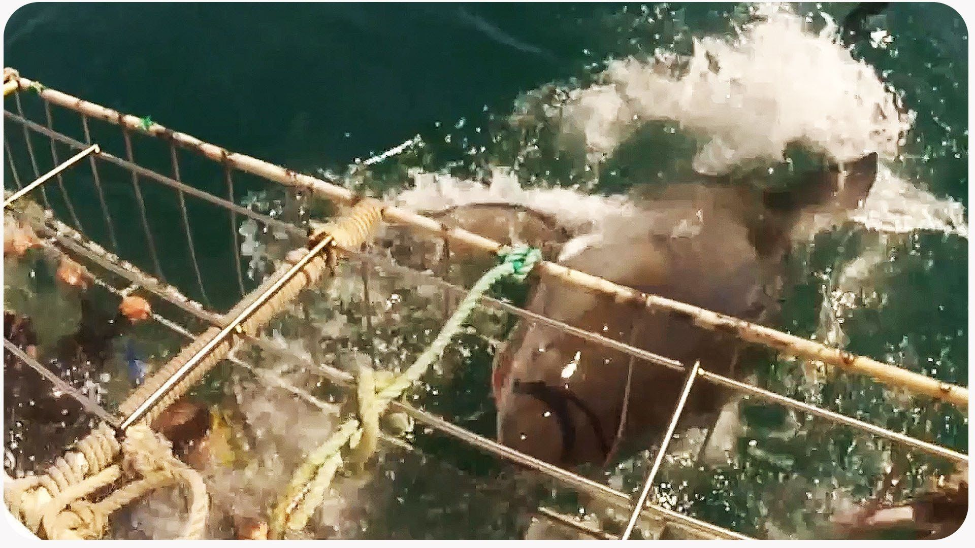 Video thumbnail for youtube video Vicious Great White Shark Attacks Cage, Nearly Gets To Diver  – PBH2