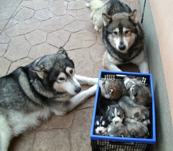 Adorable Pet Family