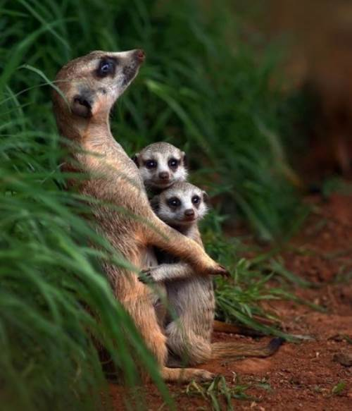 Cute Animal Family