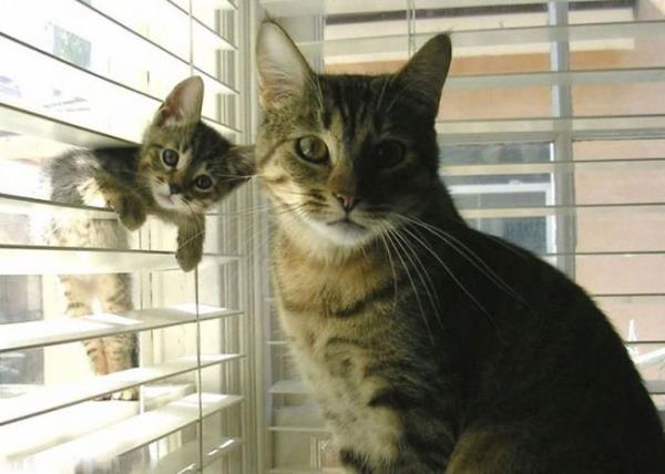 Cutest Animal Families Cats