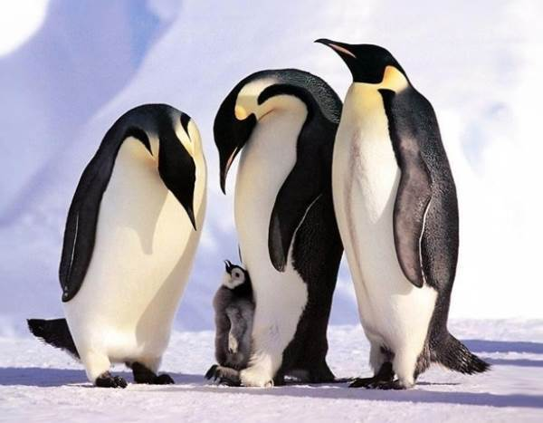 Cutest Animal Families