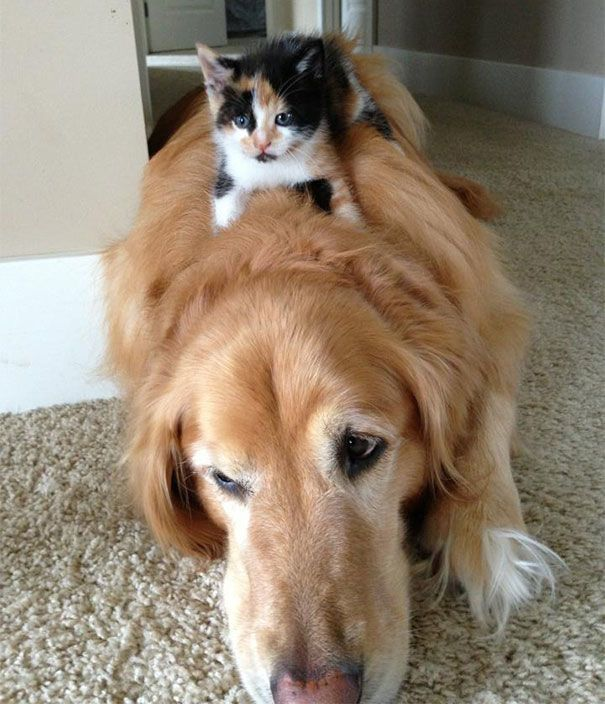 Cute Dog And Cats