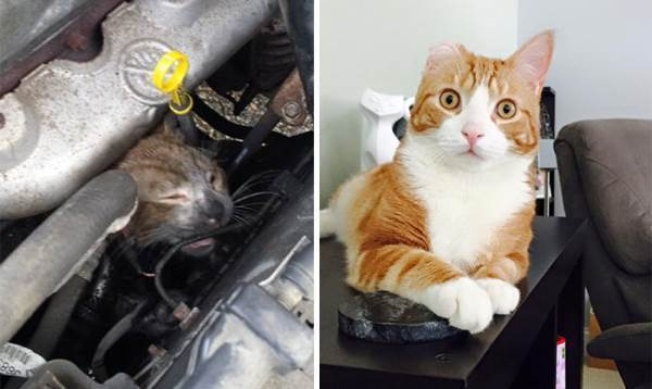Before And After Adoption Cat
