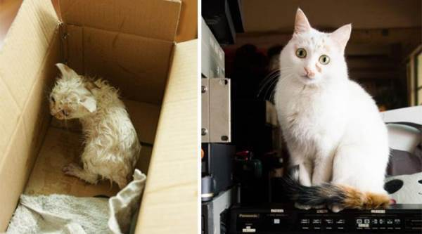 Before And After Animal Rescues