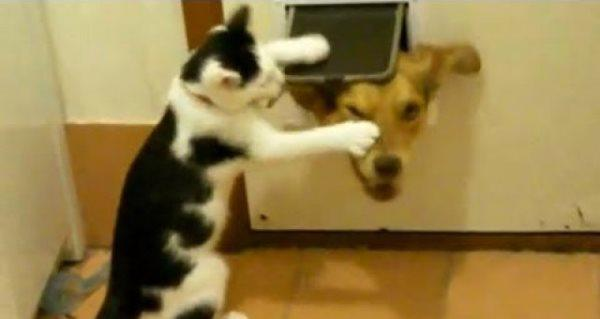 Cats Being Jerks