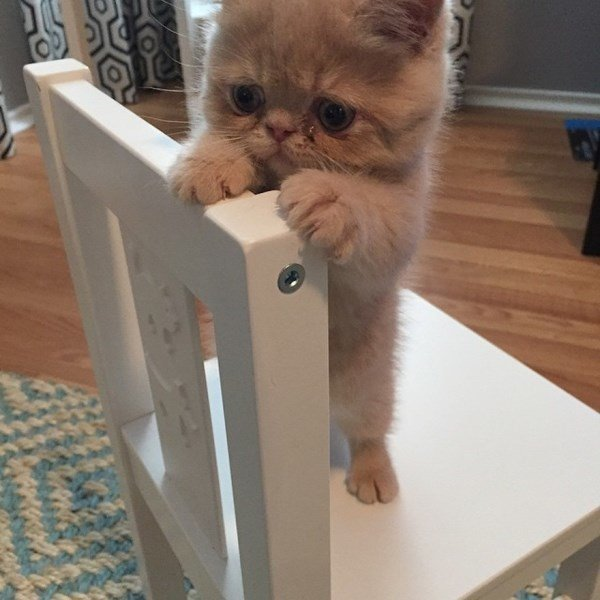 Adorable George The Cat