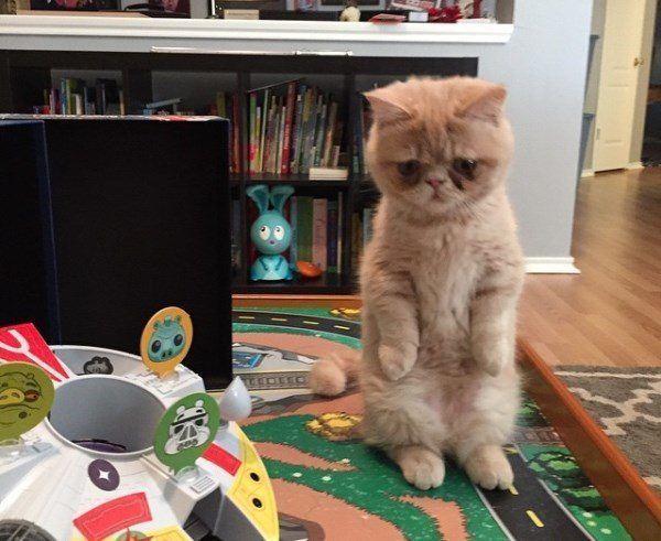 George 2 Legs Kitten