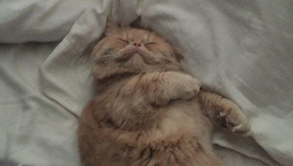 Sleeping George 2 Legs