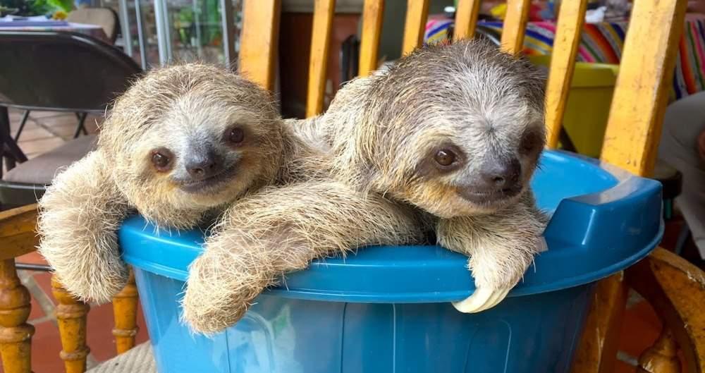 Cute Sloths