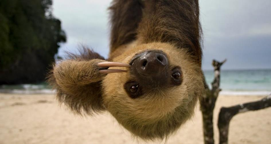 Sloth Gifs